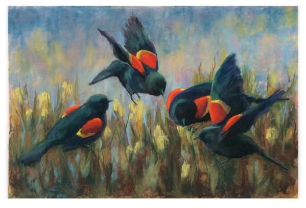 DonnaKbirds